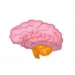 مغز - سی پی یو - رم - هارد